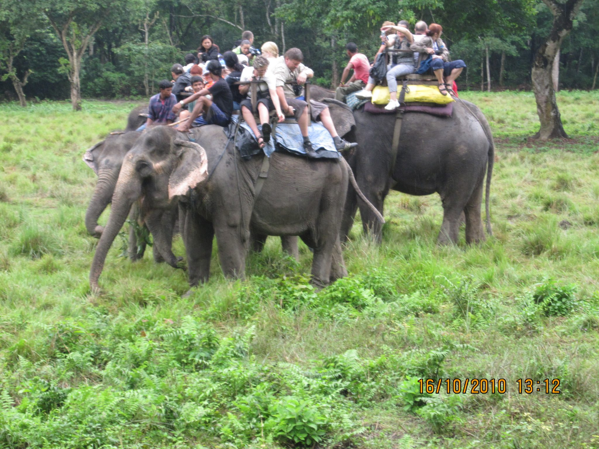 Chitwan_National_Park_-_Elephant_back_riding-14